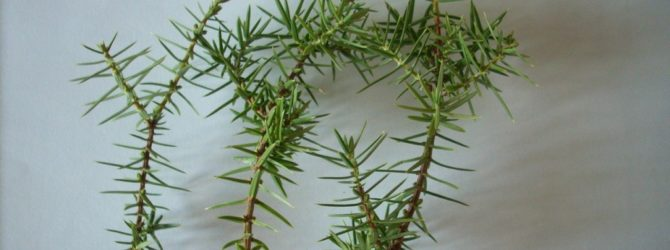 Как размножать растения отводками