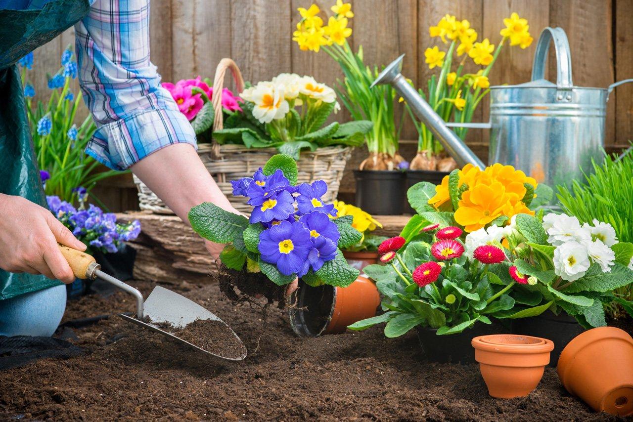 Какие цветы сажать в апреле
