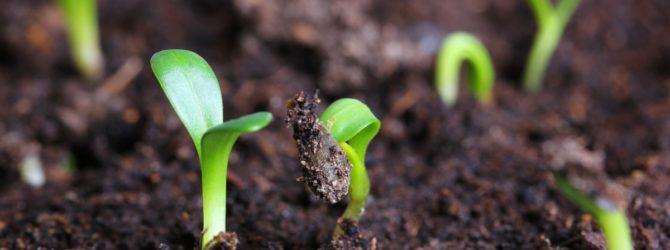 высадка семян