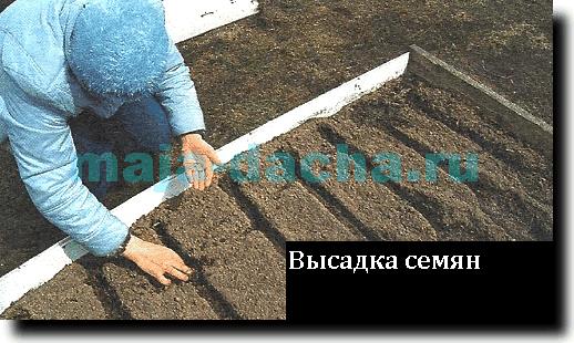 от схемы посадки семян).