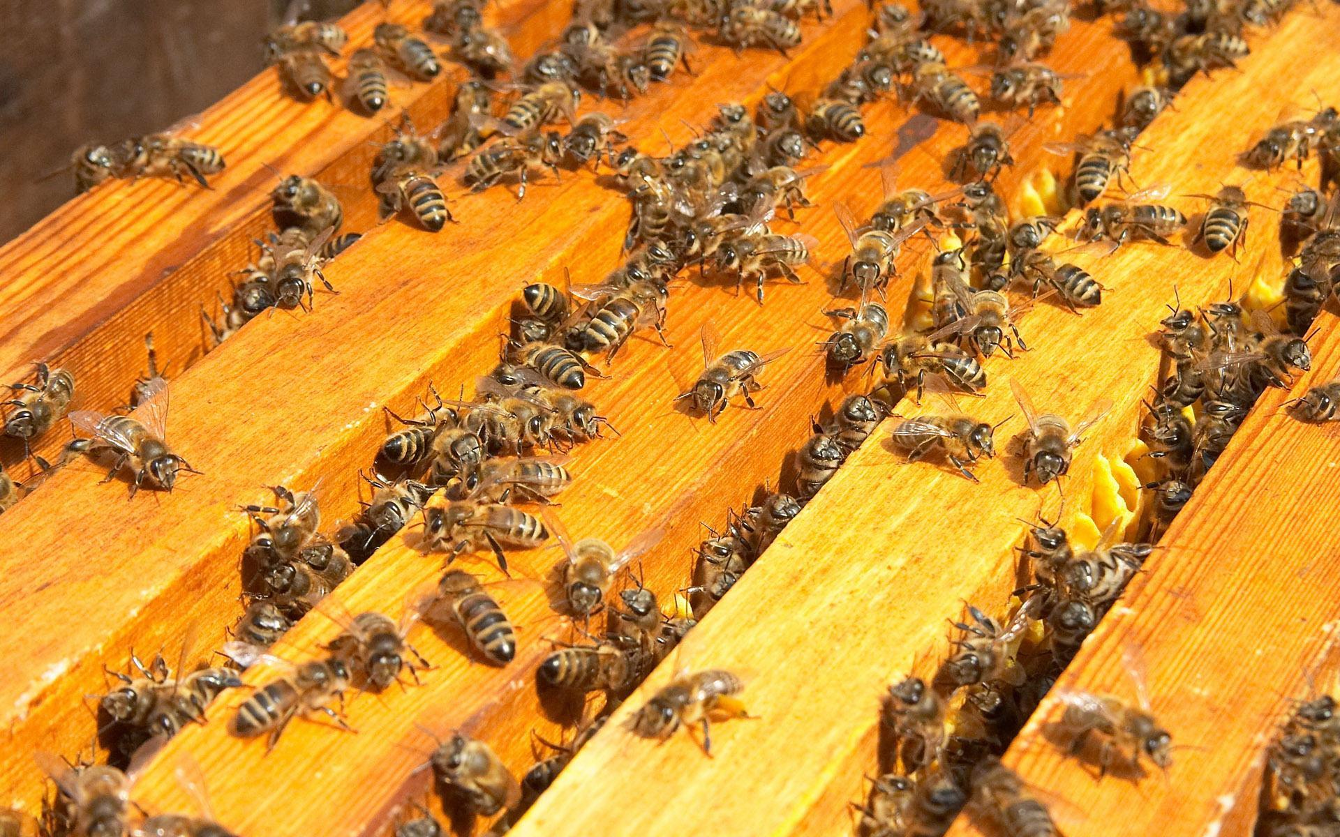 Как сделать маску пчелы своими руками 61