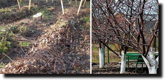 Зимняя защита и способы утепления растений