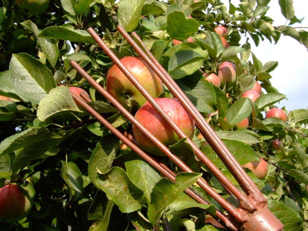 Приспособление для снятия плодов с деревьев