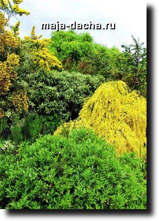 цветные растения для дачи