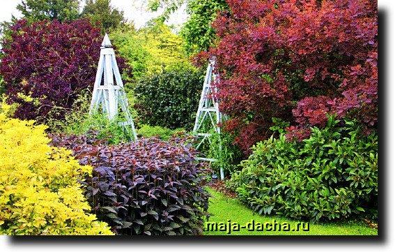 красные растения для сада