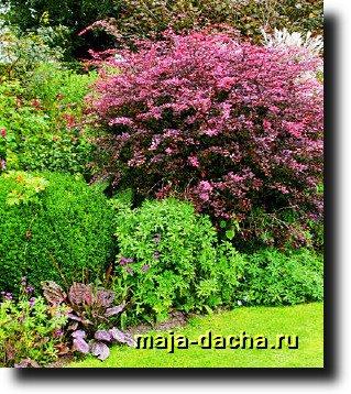 красный цвет в саду