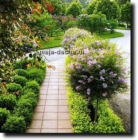 Теневыносливые деревья и кустарники для сада