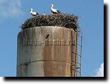 аист на водонапорной башне фото