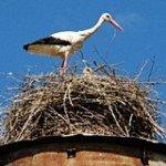 Аист на даче или делаем гнездо сами