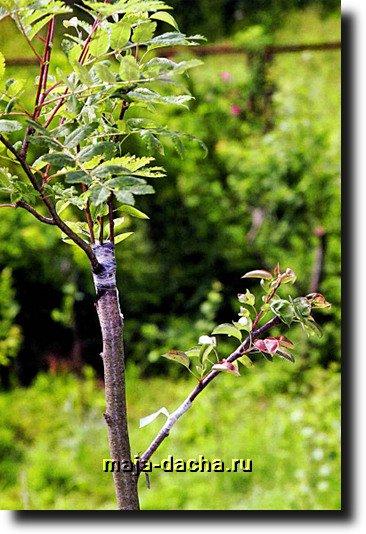 лечение ран деревьев