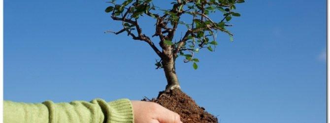 саженец на дереве