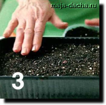 Как вырастить репчатый лук