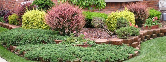 Мини-деревья для палисадника