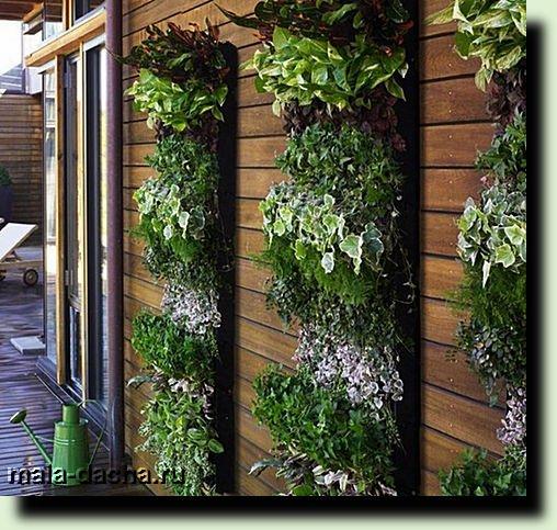 Вертикальное озеленение: