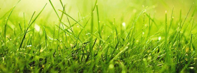 Органический газон