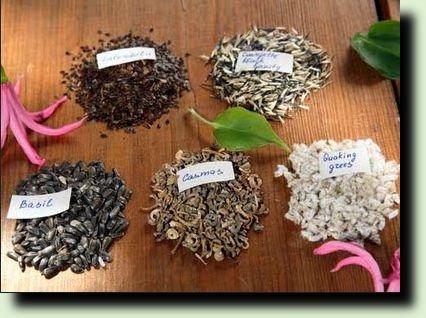 выбирать семена