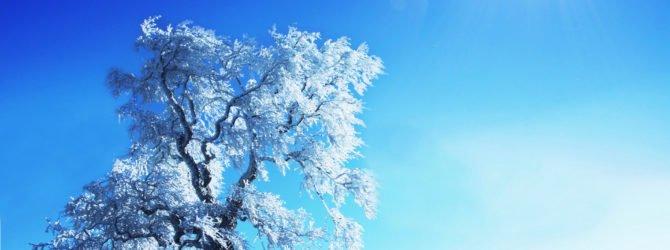 дерево зима