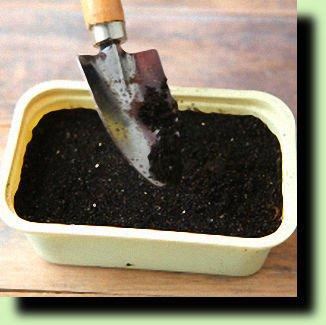 выращиваем картофель из семян