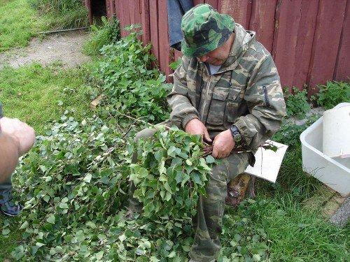 Заготовка банных веников происходит в июне-августе