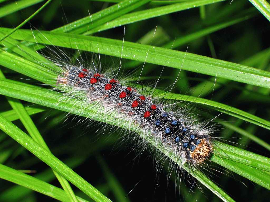 Гусеница - насекомое-вредитель для сада