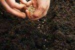 Равномерный посев семени