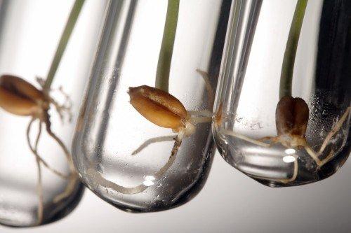 Хороший урожай зависит от сорта семян