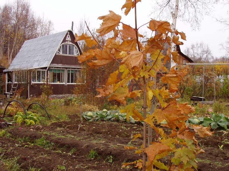 Картинки осеннего огорода