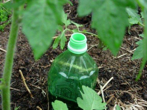 Увлажнение почвы с помощью пластиковых бутылок