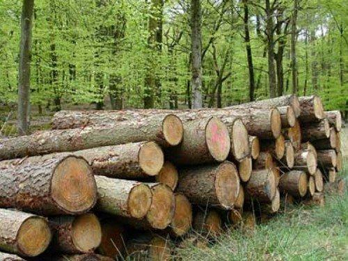 Аренда леса для заготовки дров