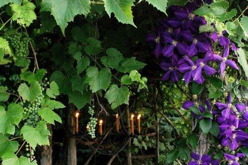Вертикальное озеленение плетущимися растениями
