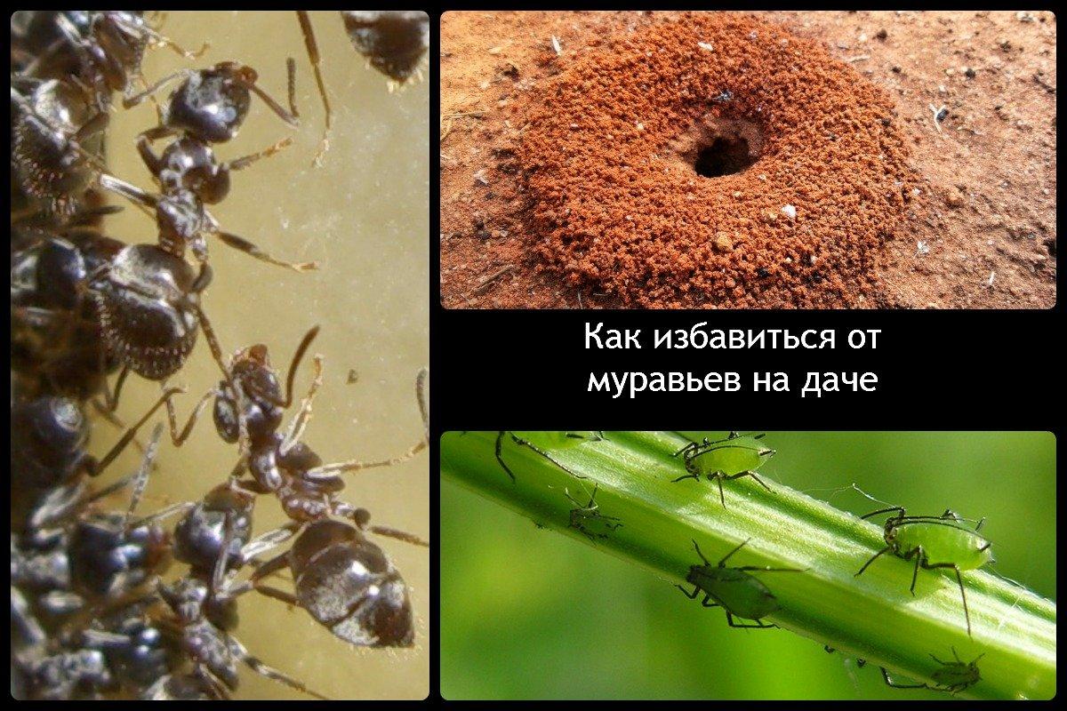 Чем вывести муравьёв в домашних условиях 324