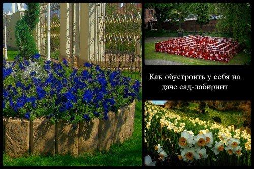 Сад лабиринт, тюльпаны, ирисы