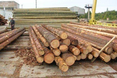 Какая древесина подходит для заготовки