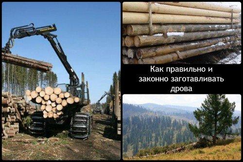 Законная заготовка дров
