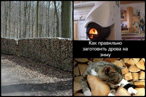 Заготовка дров на зиму