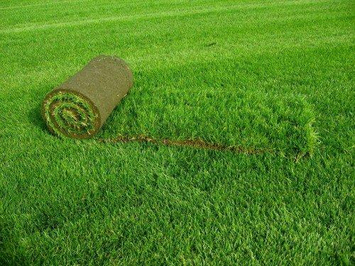 Рулонный газон для спортивного поля на даче