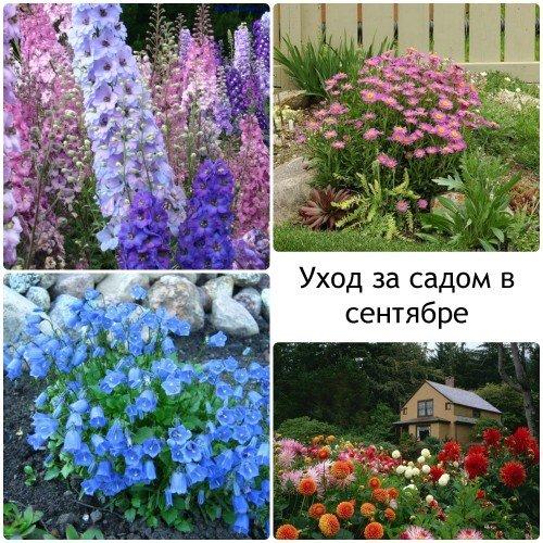 Уход за цветами осенью