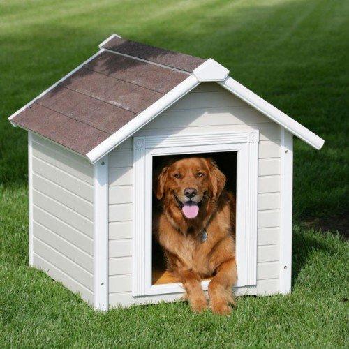 Собака - верный охранник вашего дома