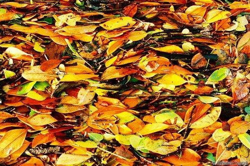 Листья для подкормки
