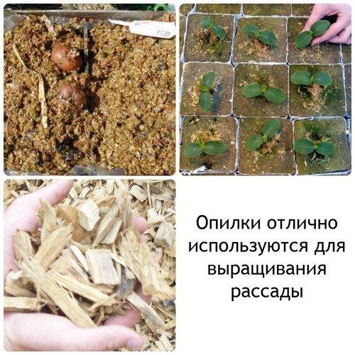 Выращивание рассады на опилках