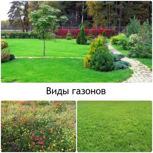 Какими бывают газоны