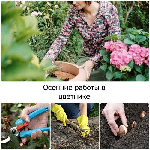 Работы в цветнике осенью