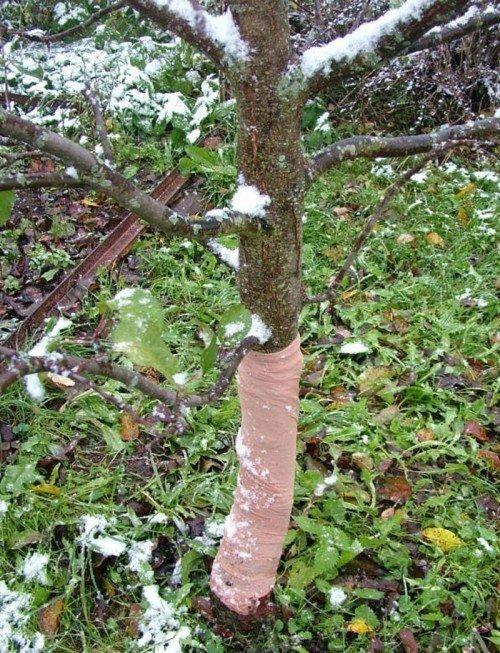Защищенное дерево