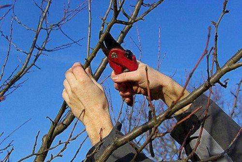 Подрезка деревьев