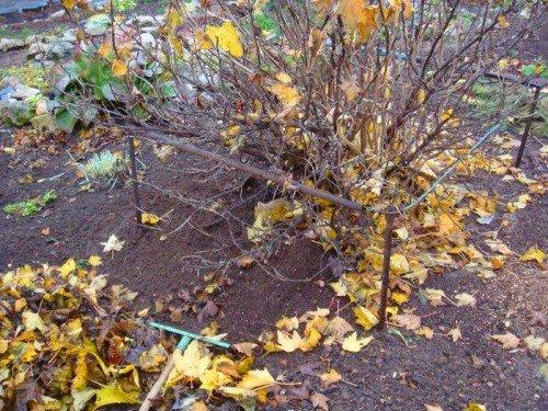Опавшие листья на почве