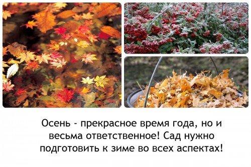 Осеннея время