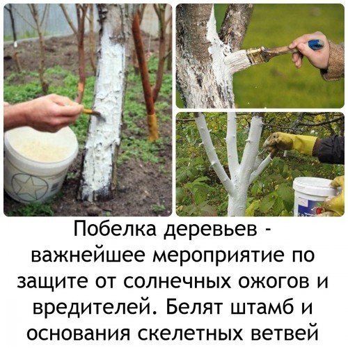 Побелка деревьев