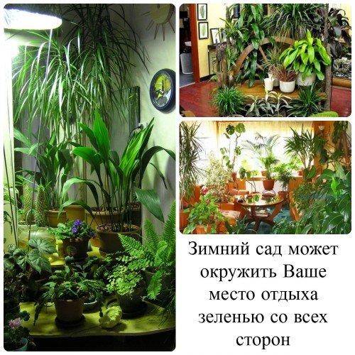 Зимний сад много растений
