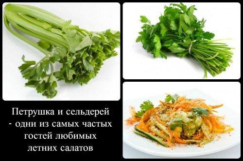Петрушка и сельдерей в салате