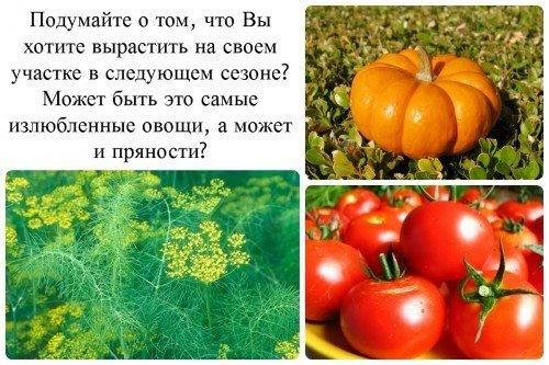 овощи и зелень для посадки